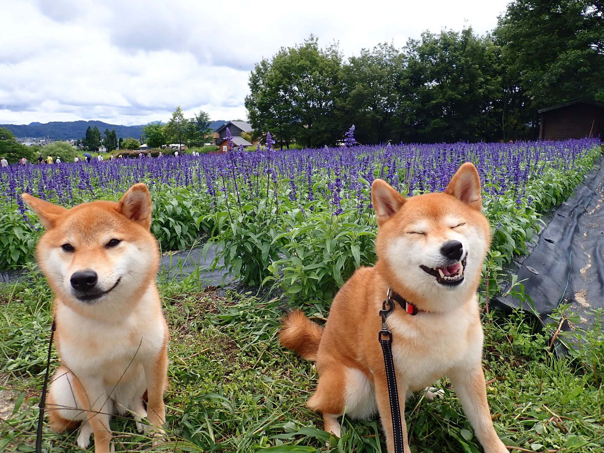 【ロングリード禁止!】ペットとの散歩に最適な安曇野ちひろ公園のご紹介!